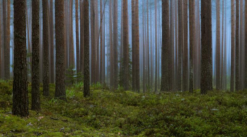 Hepner ja Saaremäe: metsanduse arengukava pikendamine ei ole parim lahendus