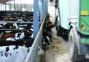 Tööloa lõppedes saab võõrtööline Eestis edasi töötada kuni 31. juulini põllumajanduses